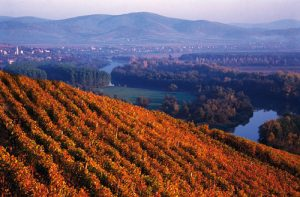 Tokaji wine region - Decanter